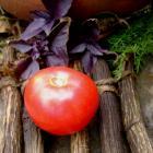 Aegean Rose tomato seeds