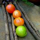 Bogomila heirloom tomato