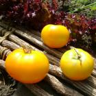 Carobetta Tomato Seeds