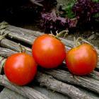 Erevani Heirloom Tomato Seeds