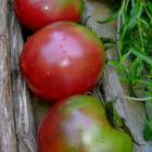 Haley's Purple Comet open pollinated tomato seeds