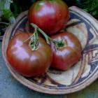 Indian Stripe tomato seeds