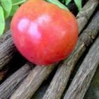 Kasuga Tomato Seeds