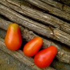McMurray Cherry heirloom tomato seeds