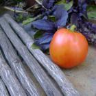 New Sidor tomato seeds