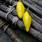 Lemon Drop Pepper seeds