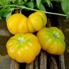 Potosi Yellow Tomato Seeds