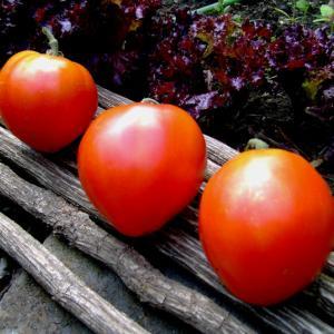 Dwarf Red Heart Heirloom Tomato Seeds
