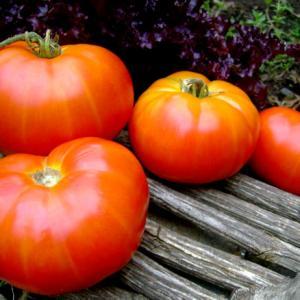 Sooner heirloom tomato