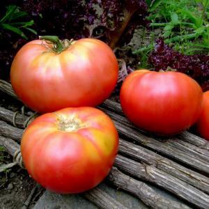 Linhart's Giant Heirloom Tomato Seeds