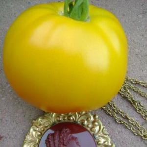 Rabideau Tomato Seeds