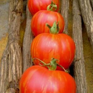 Vernissage Pink Tomato Seeds